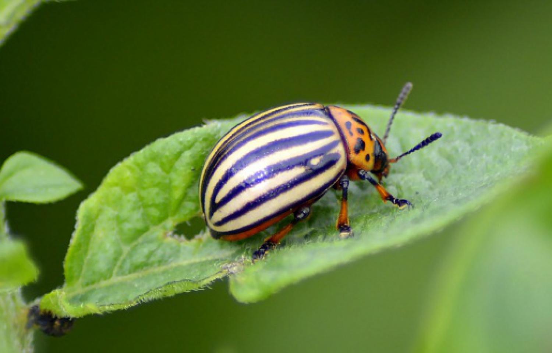 beetle-2662846_1280