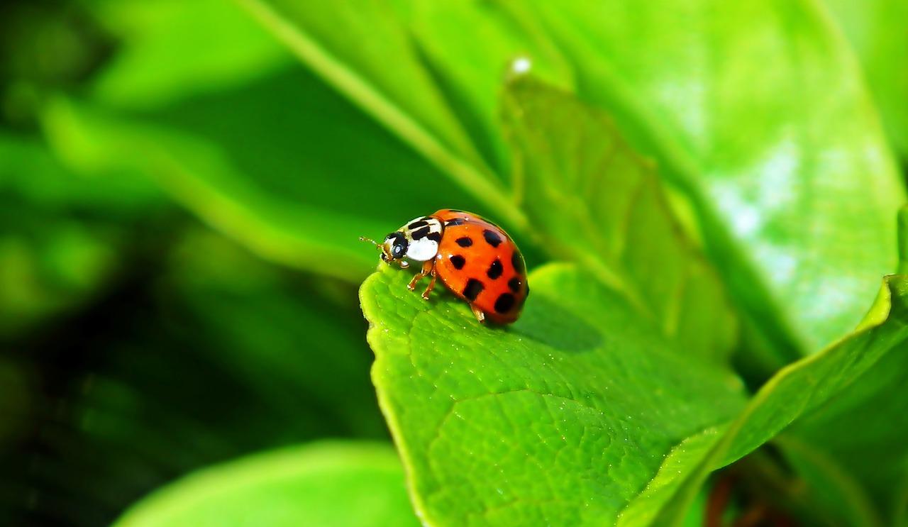 ladybug-4827823_1280