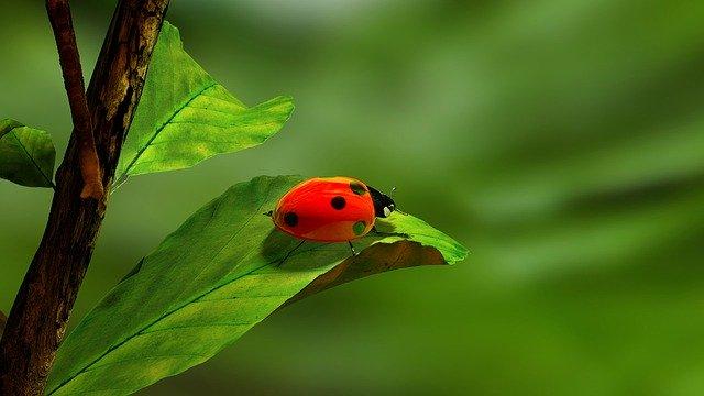 ladybird-163480_640